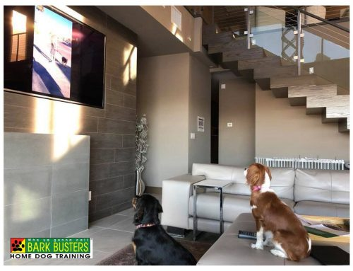 Why In-Home Dog Training Matters